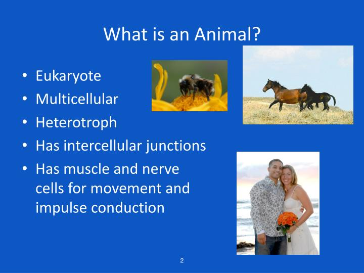 What is an Animal?