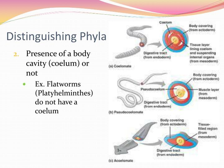 Distinguishing Phyla