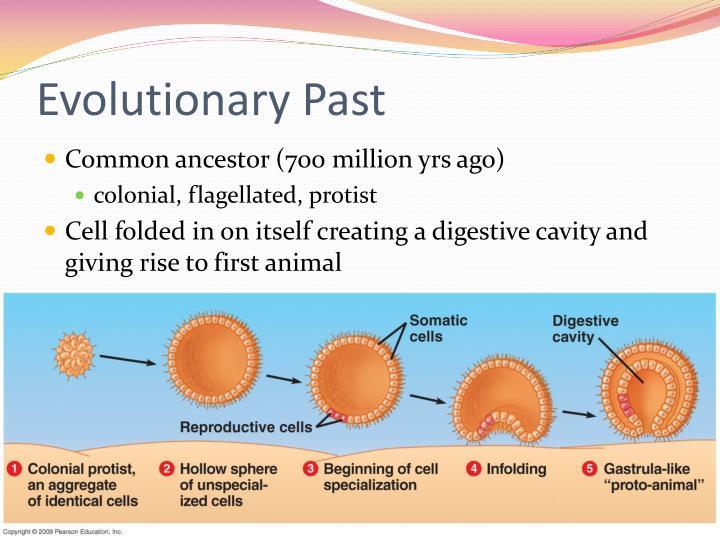 Evolutionary Past