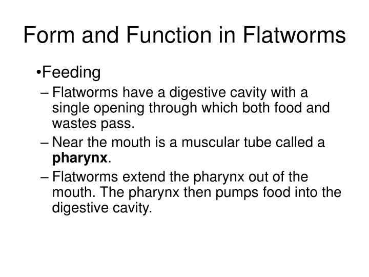 flatworms roundworms and rotifers Under construction we will cover nematodes to some extent when we discuss flatworm parasites (ch 14) rotifers were already covered a bit in relationship to.