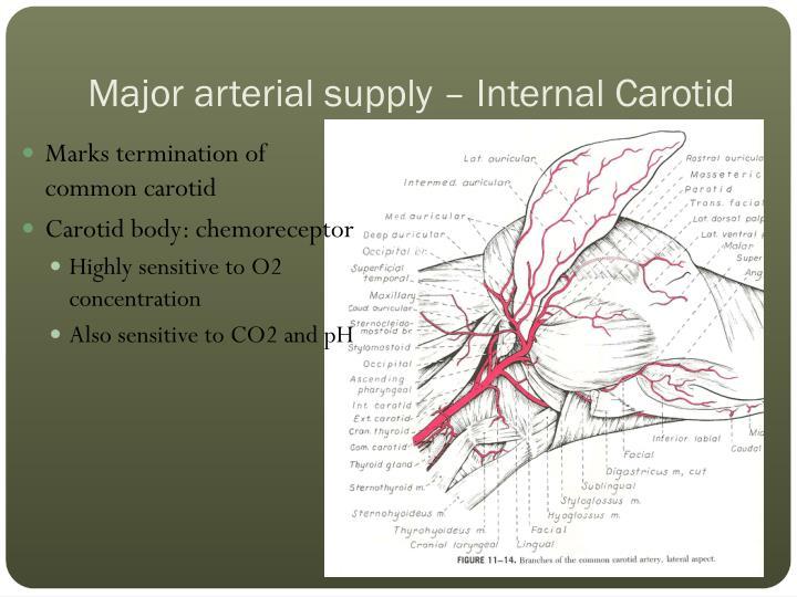 Major arterial supply – Internal Carotid