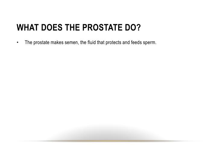 WHAT DOES THE PROSTATE DO?