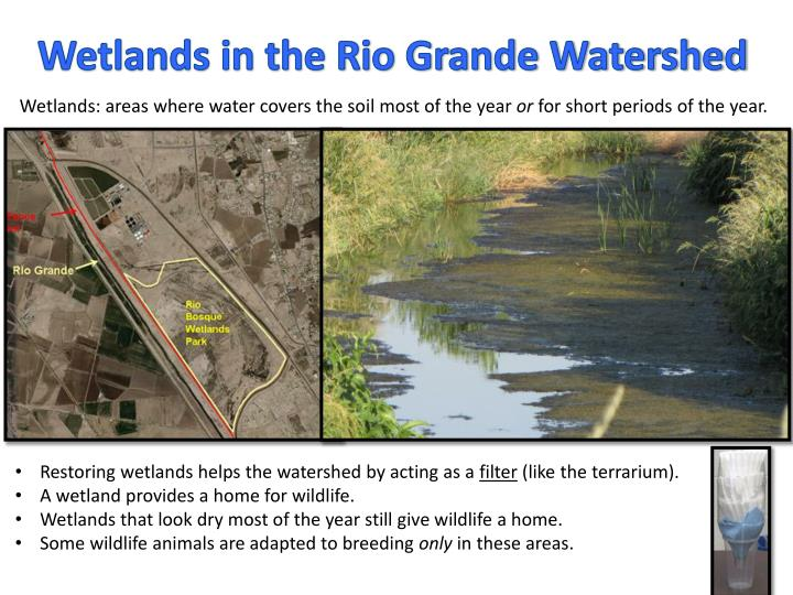 Wetlands in the Rio Grande Watershed