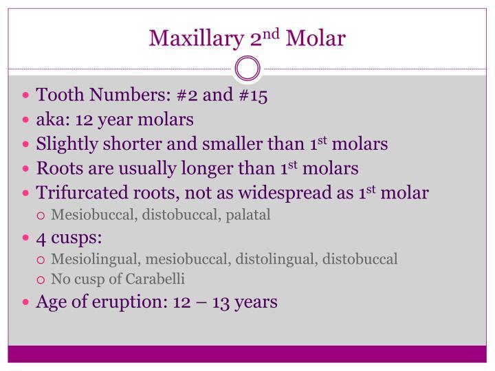 Maxillary 2