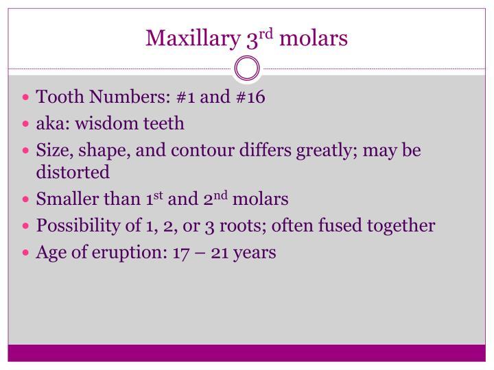 Maxillary 3