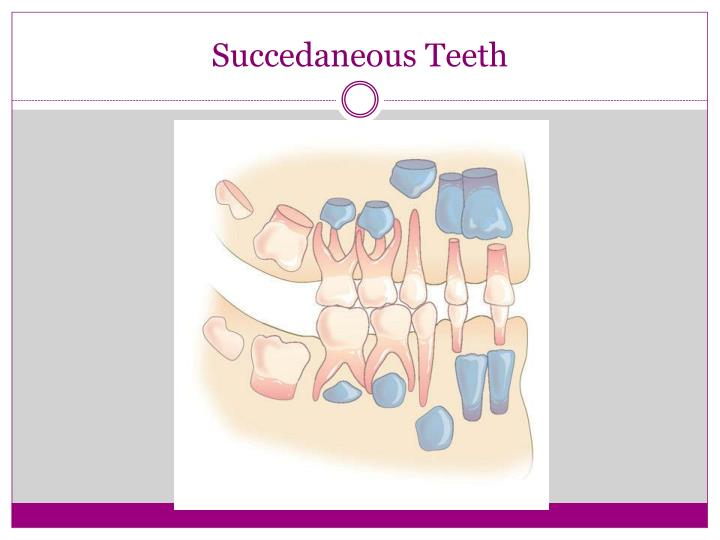 Succedaneous teeth1
