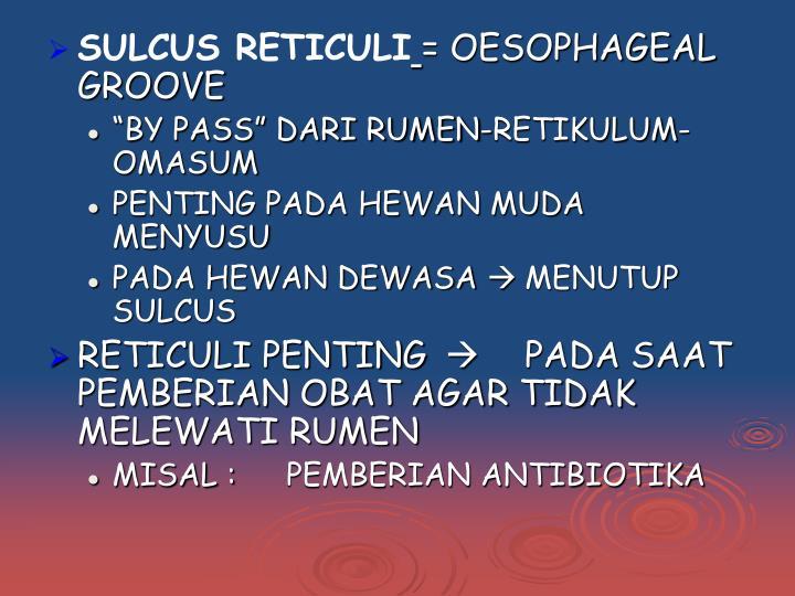 SULCUS RETICULI