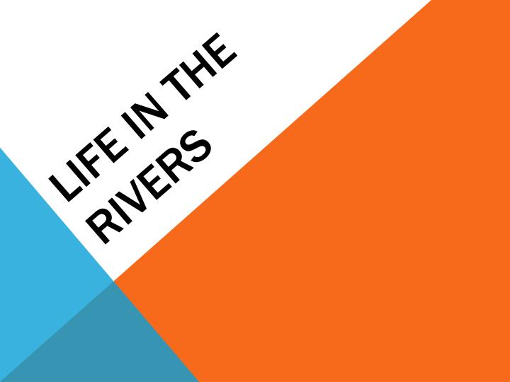 Life in the rivers