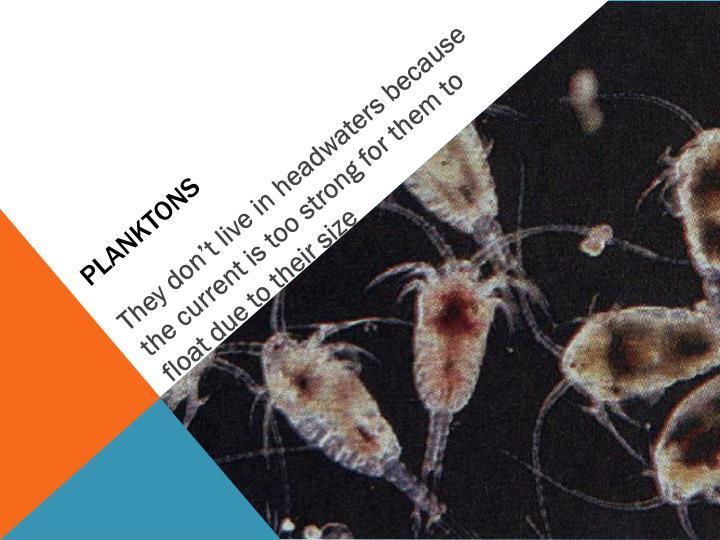 Planktons