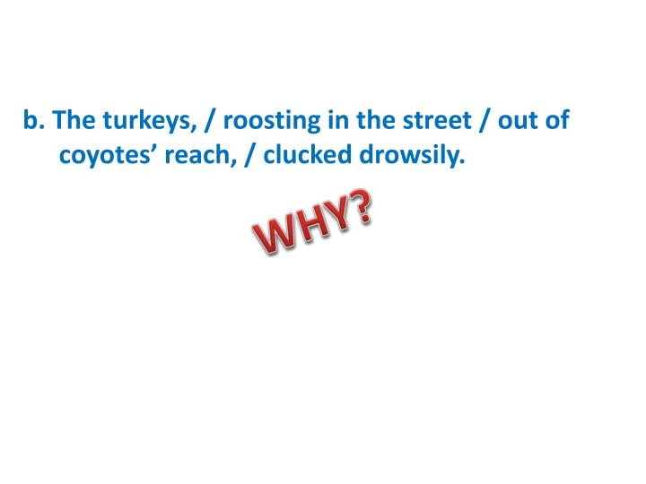 B the turkeys roosting in the street out of coyotes reach clucked drowsily
