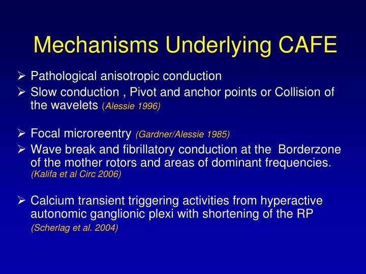 Mechanisms Underlying CAFE