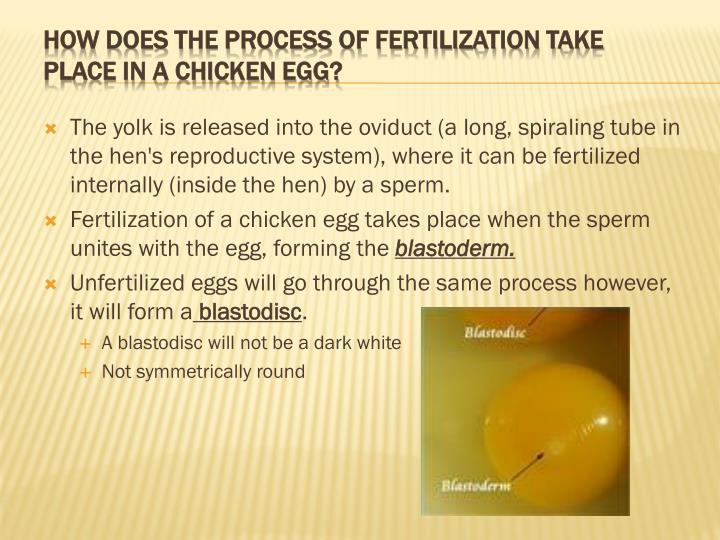 how does fertilization takes place