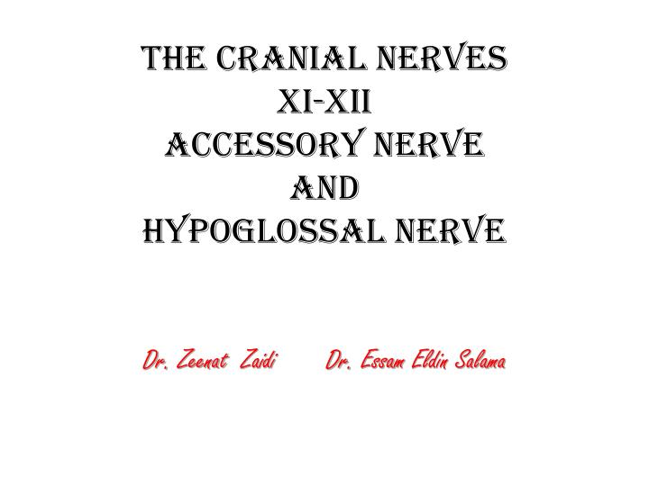 The cranial nerves xi xii accessory nerve and hypoglossal nerve