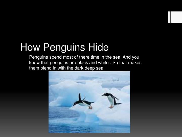 How Penguins Hide