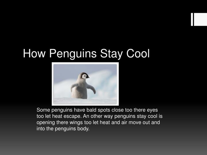 How Penguins Stay Cool