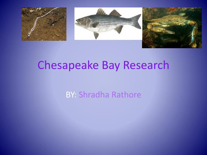 research papers chesapeake bay Shad in schools - resources news and journal articles students raise, release shad: greenbriar west students return fish to potomac river by bonnie hobbs, the connection newspapers/centre view newspaper helping the bay's rivers run silver again by karl blankenship, chesapeake bay alliance, bay journal.
