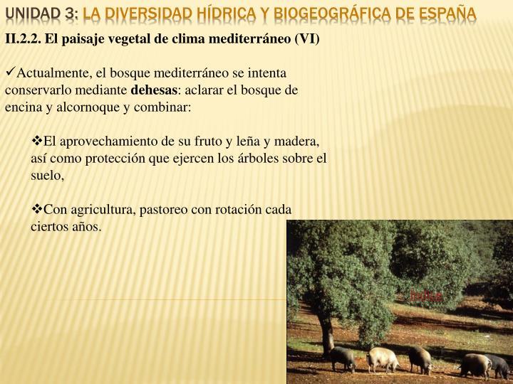 II.2.2. El paisaje vegetal de clima mediterráneo (VI)