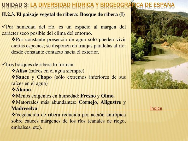 II.2.3. El paisaje vegetal de ribera: Bosque de ribera (I)