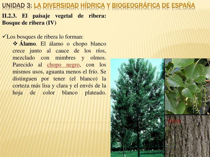 II.2.3. El paisaje vegetal de ribera: Bosque de ribera (IV)