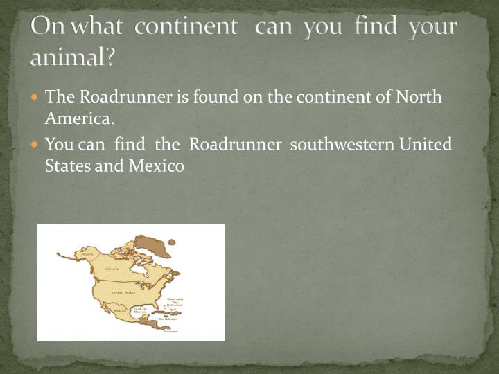 On what continent can you find your animal