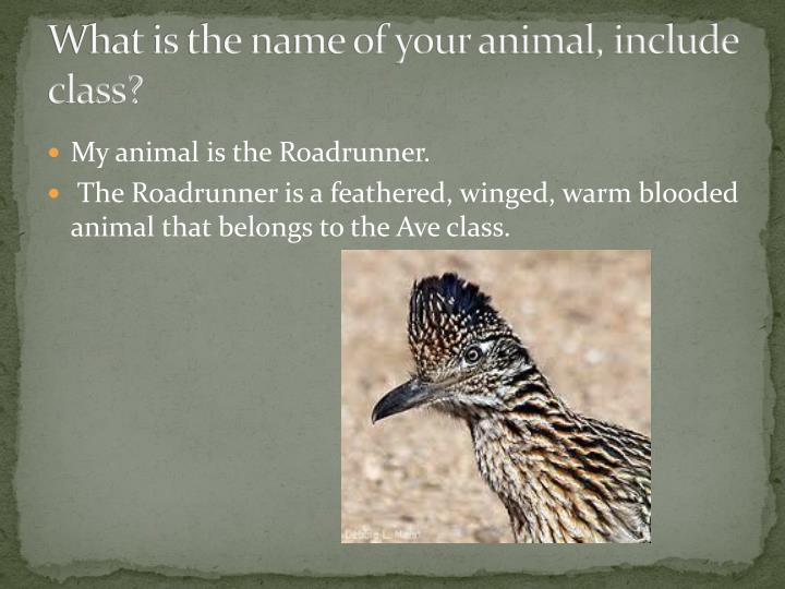 What is the name of your animal, include class?