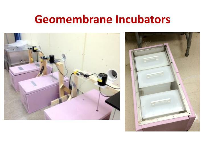 Geomembrane