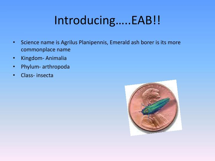 Introducing…..EAB!!