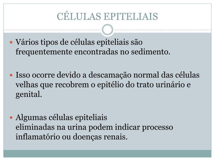 CÉLULAS EPITELIAIS