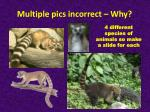 multiple pics incorrect why