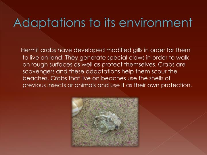 Adaptations to its environment