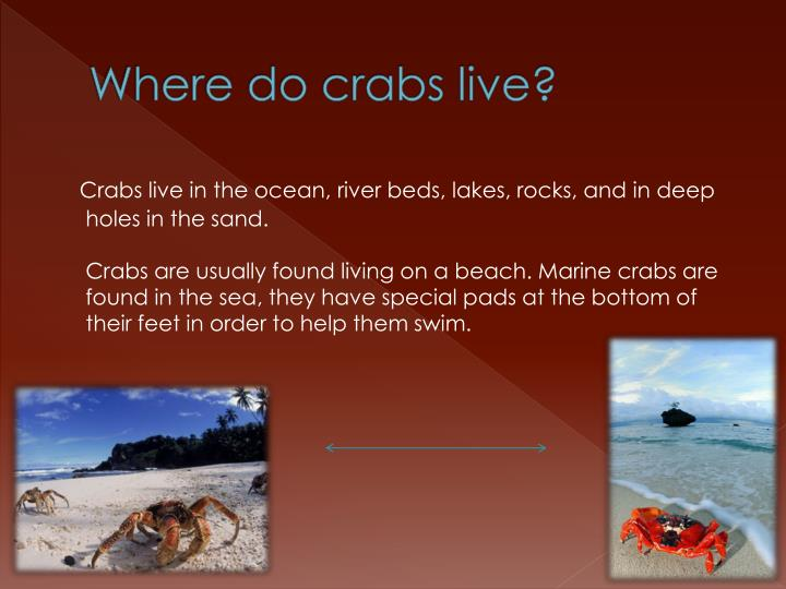 Where do crabs live?