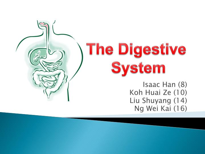 The Digestive