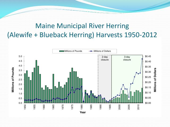 Maine Municipal River Herring