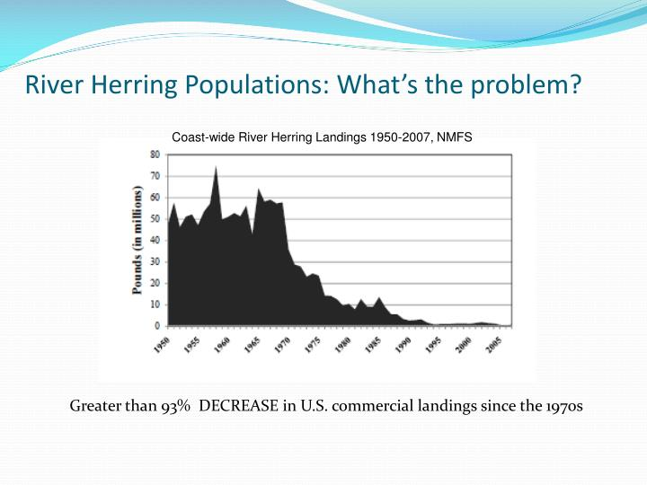 River Herring Populations: What's the problem?