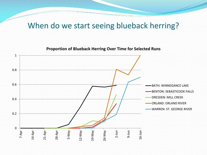 When do we start seeing blueback herring?
