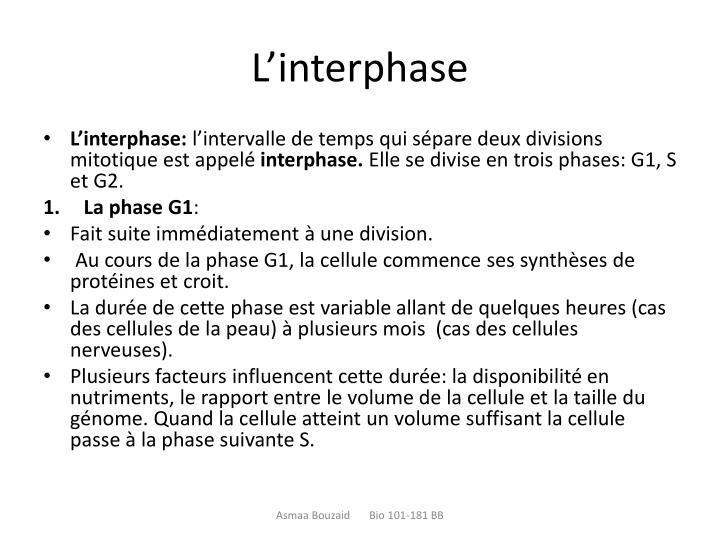 L'interphase