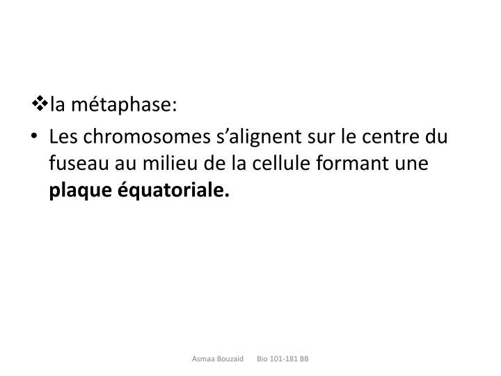 la métaphase: