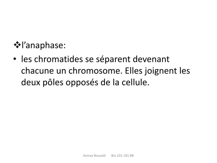 l'anaphase: