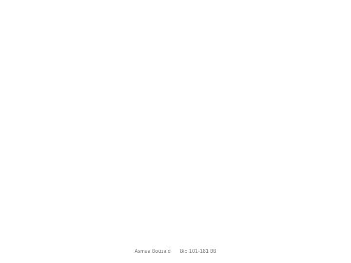 Asmaa Bouzaid       Bio 101-181 BB