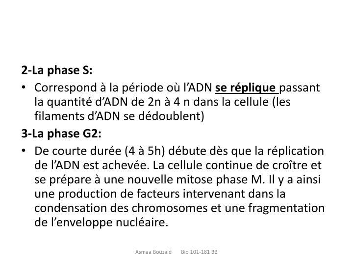 2-La phase S: