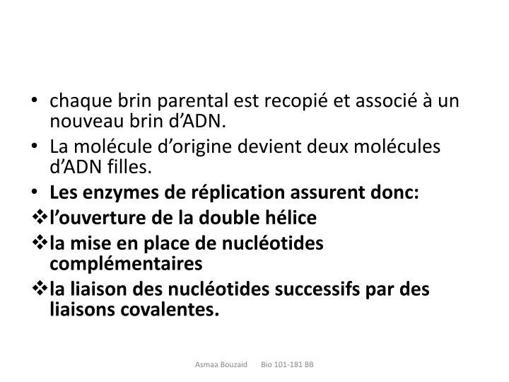 chaque brin parental est recopié et associé à un nouveau brin d'ADN.