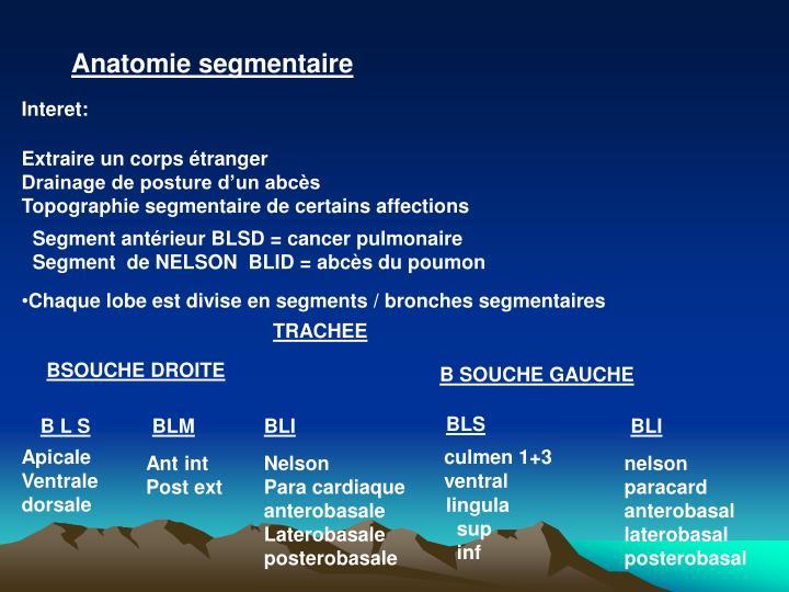Anatomie segmentaire