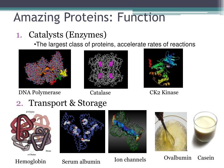 Amazing proteins function