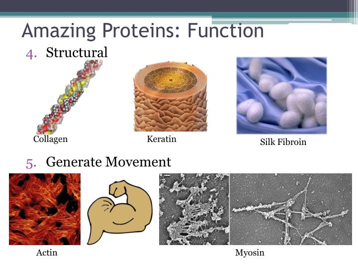 Amazing Proteins: Function