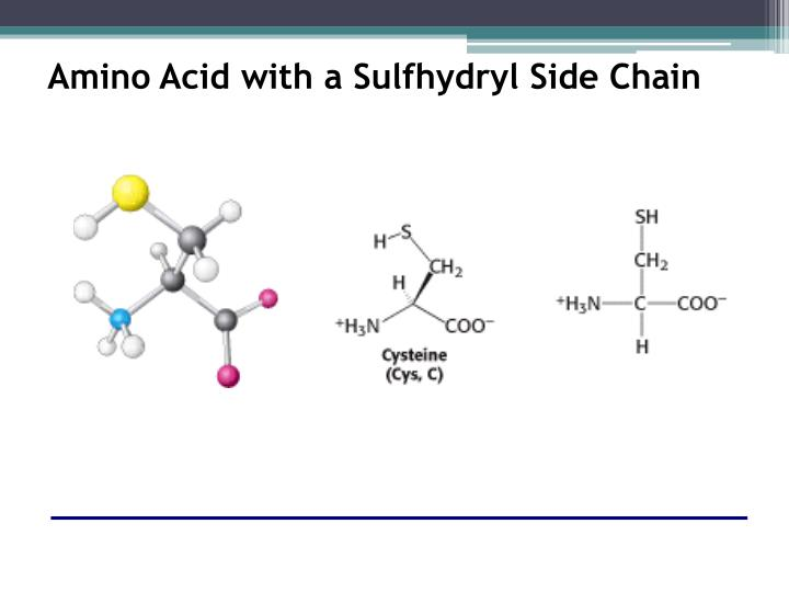 Amino Acid with a Sulfhydryl Side Chain