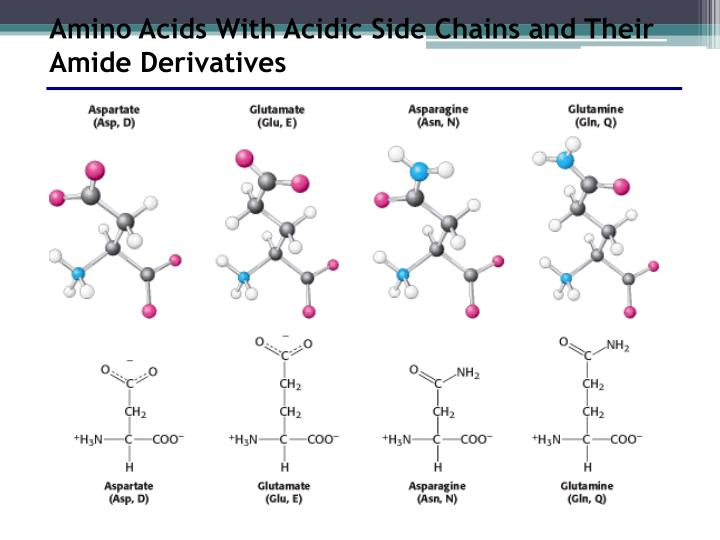 Amino Acids With Acidic Side Chains and Their Amide Derivatives