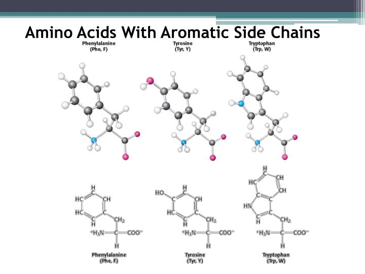 Amino Acids With Aromatic Side Chains