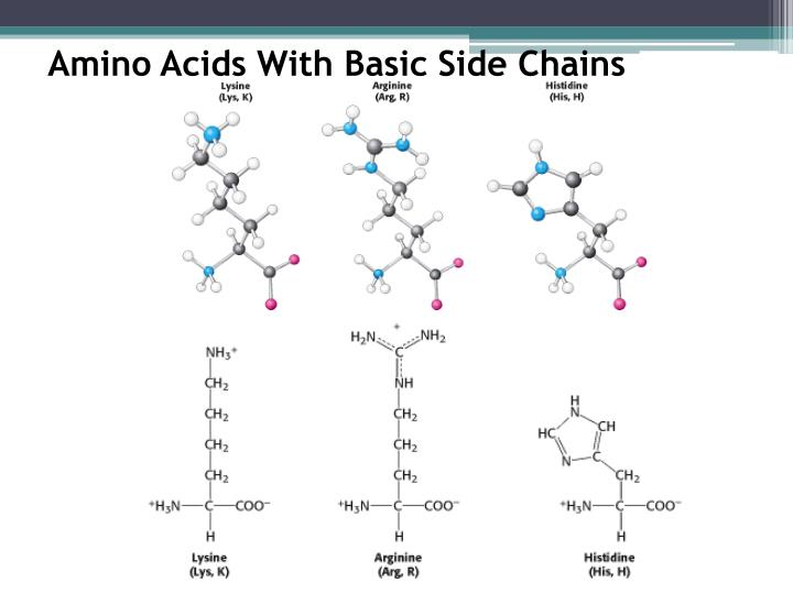 Amino Acids With Basic Side Chains