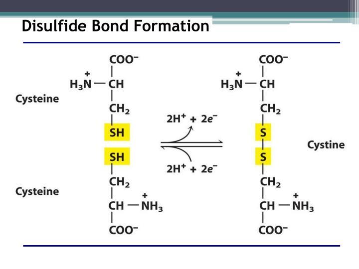 Disulfide Bond Formation