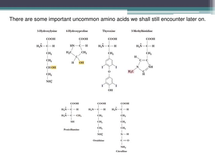 There are some important uncommon amino acids we shall still encounter later on.